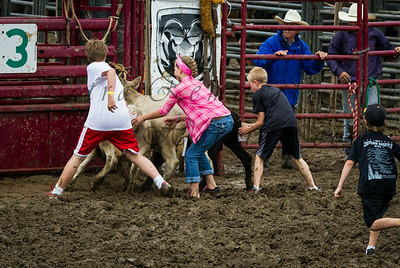 Three winners will manage to pick the paper attached to the calf's tail: The calfs
